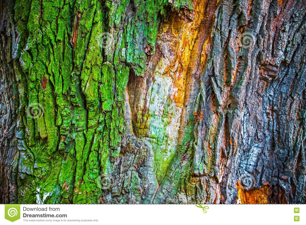 Colorful Bark Of Old Oak Tree, Abstract Nature Background Stock ...