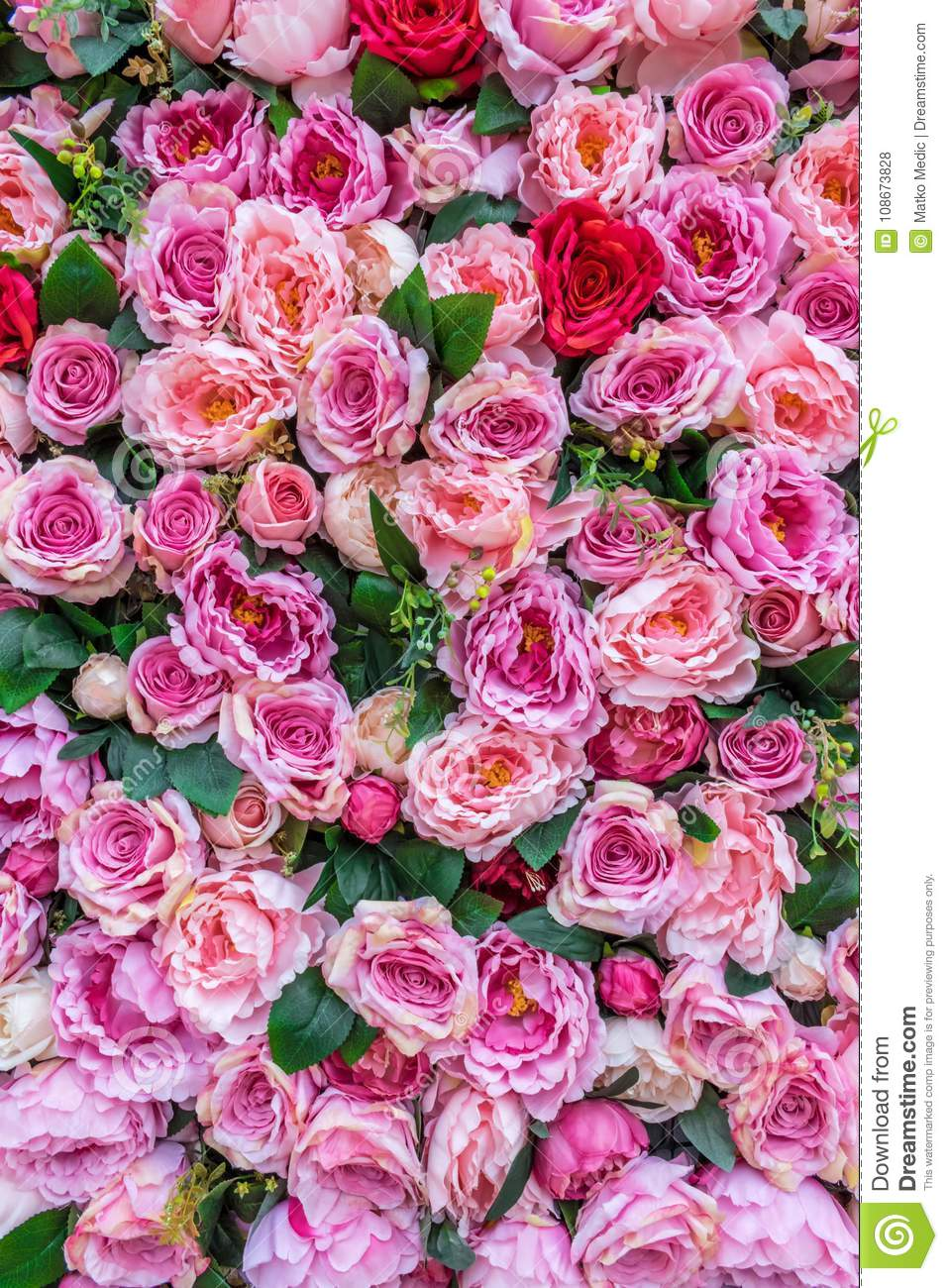Bed Of Roses 1 Stock Photo Image Of Purple Passion 108673828