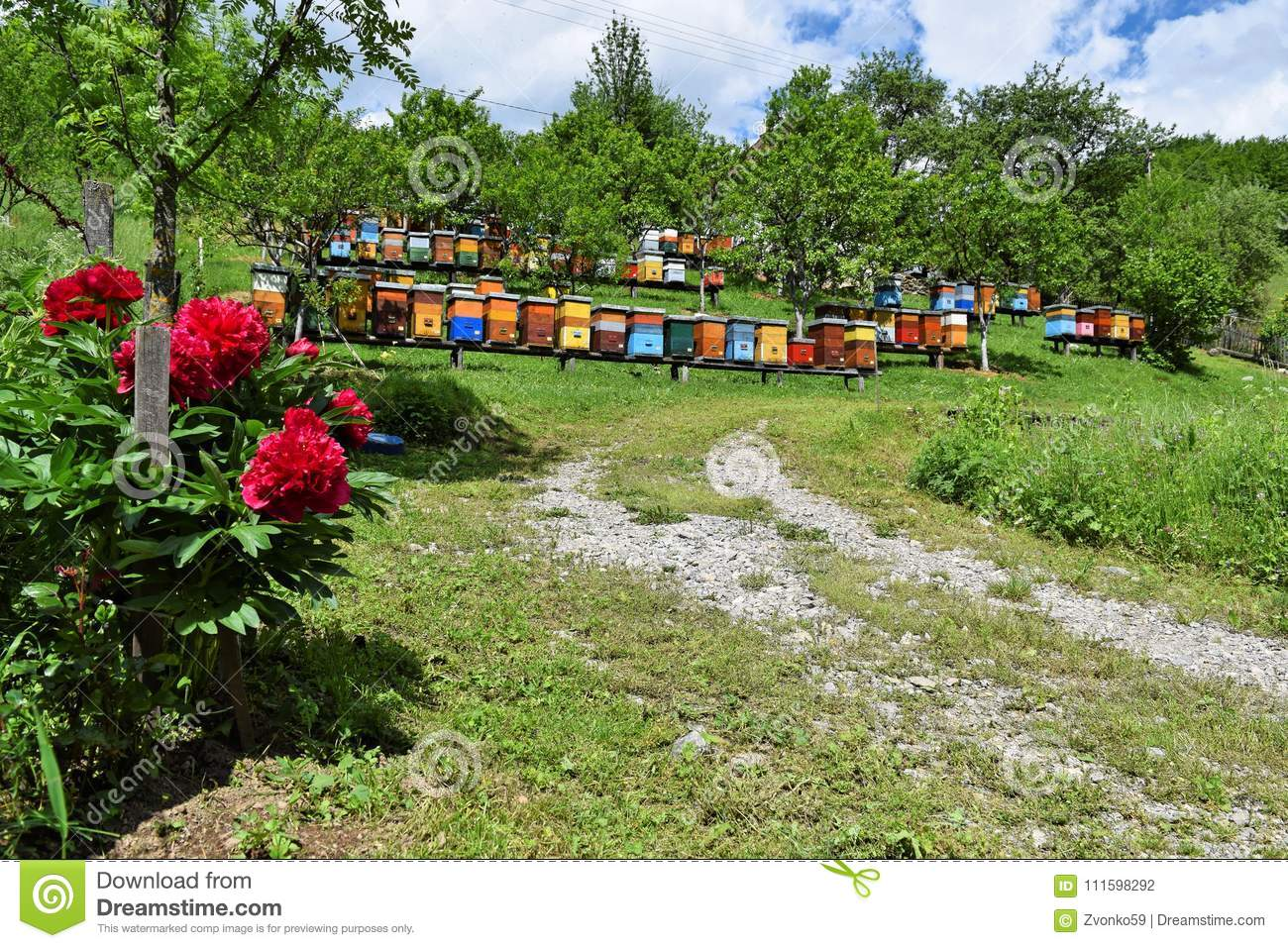 Beekeeping in rural yard during spring
