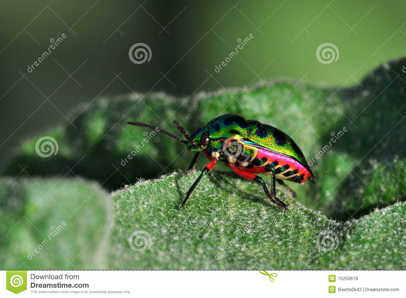 Colorful horned beetle - photo#13