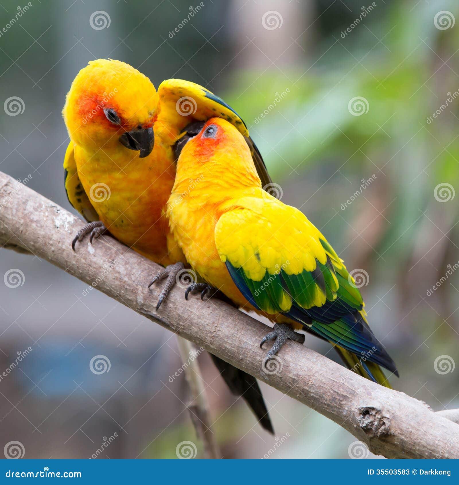 colorful birds stock photos image 35503583