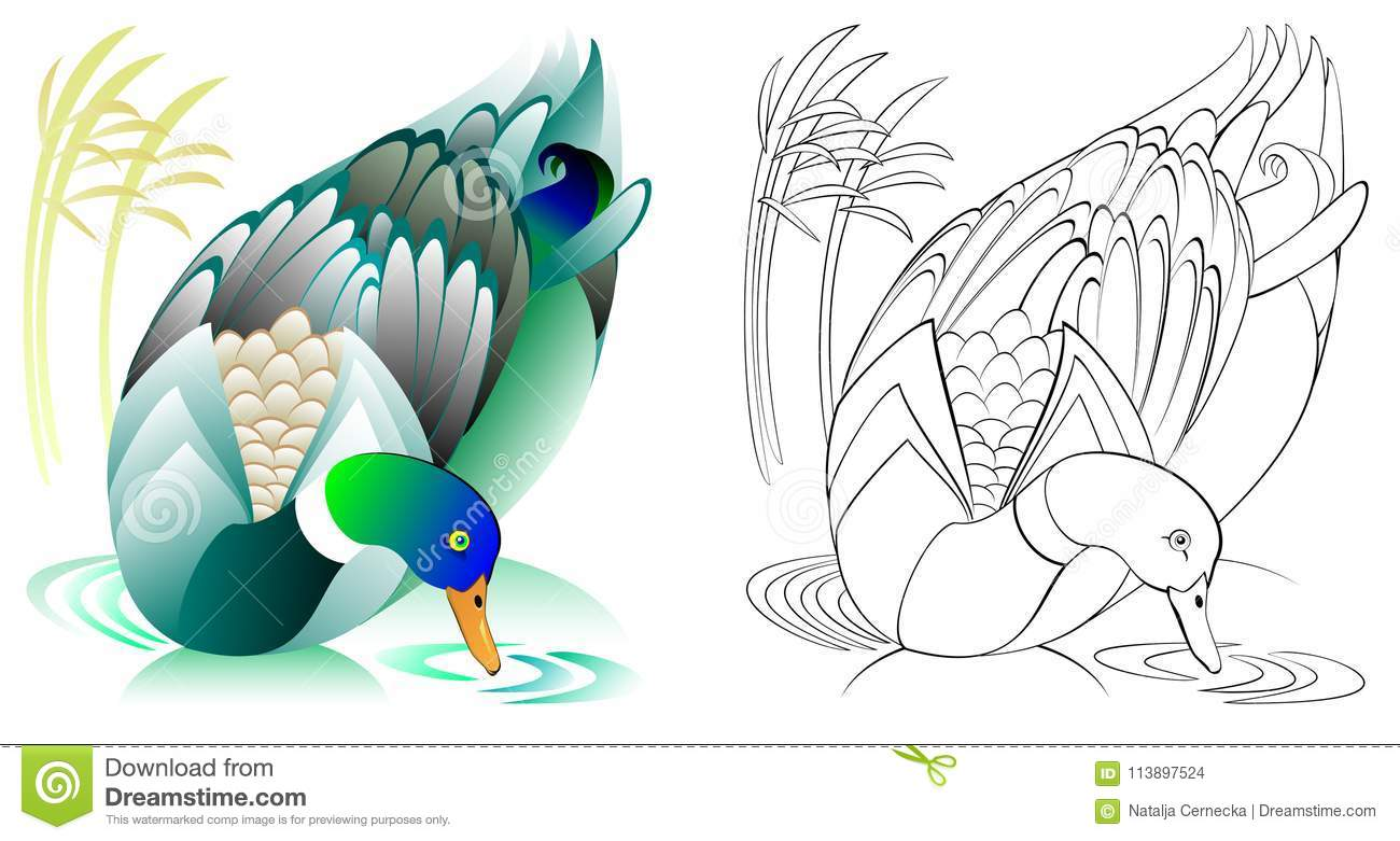 Colorful and black and white pattern for coloring. Illustration of swimming duck. Worksheet for children and adults.