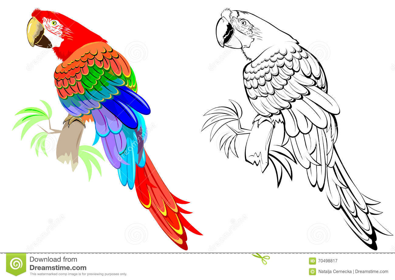 Colorful And Black And White Pattern Parrot Stock Vector