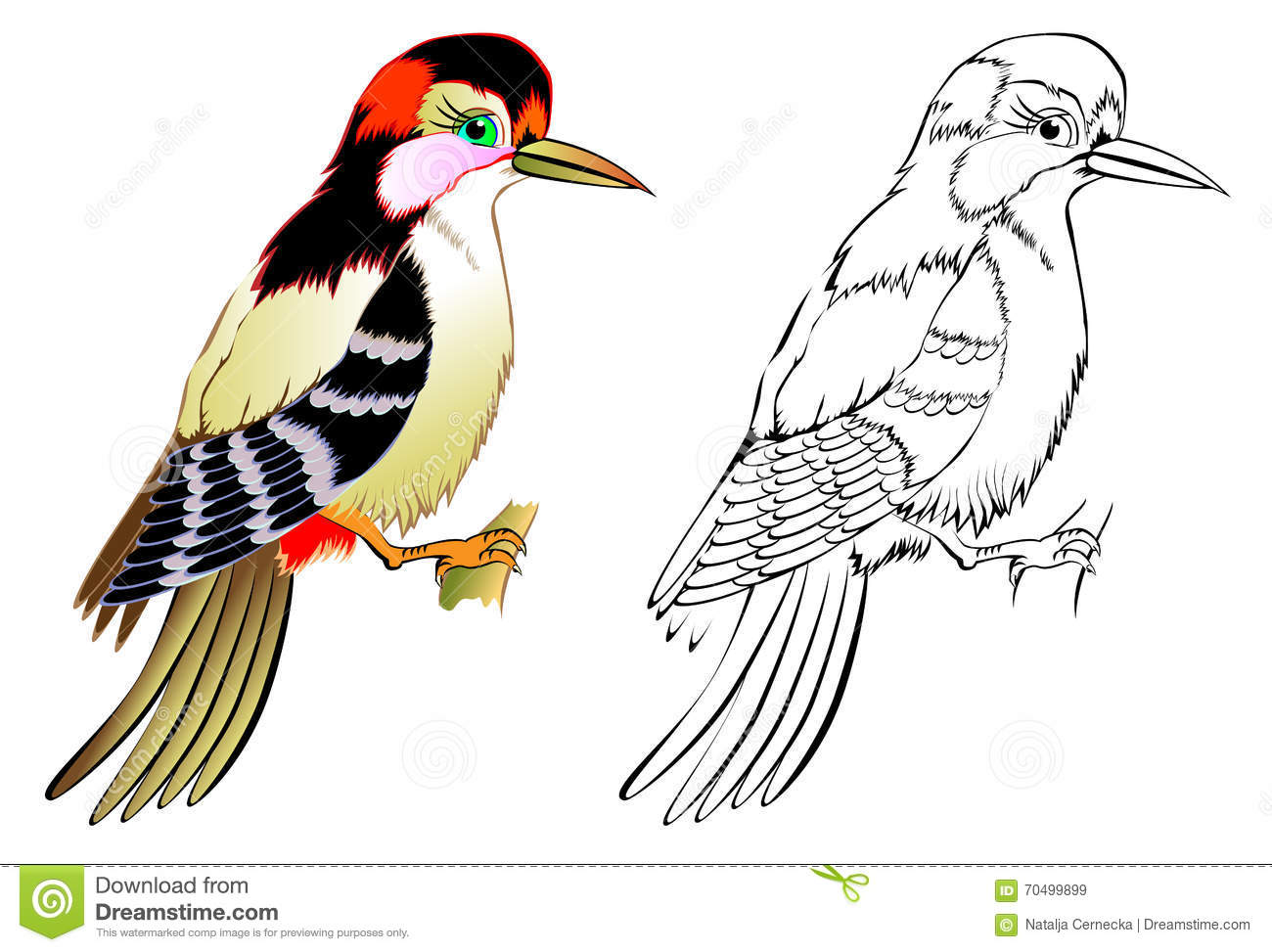 Colorful And Black And White Pattern Woodpecker Stock