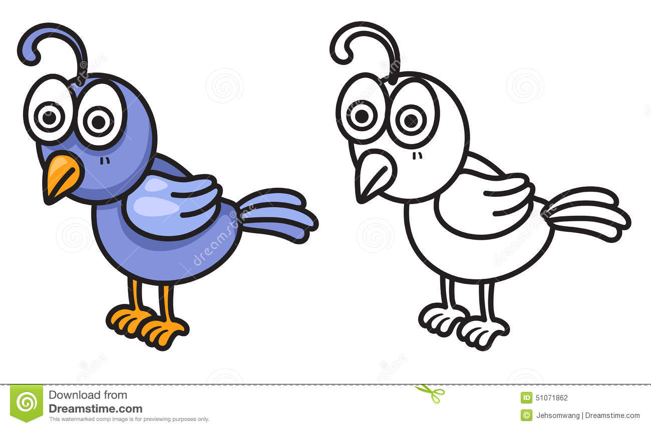 colorful and black and white quail for coloring book stock vector
