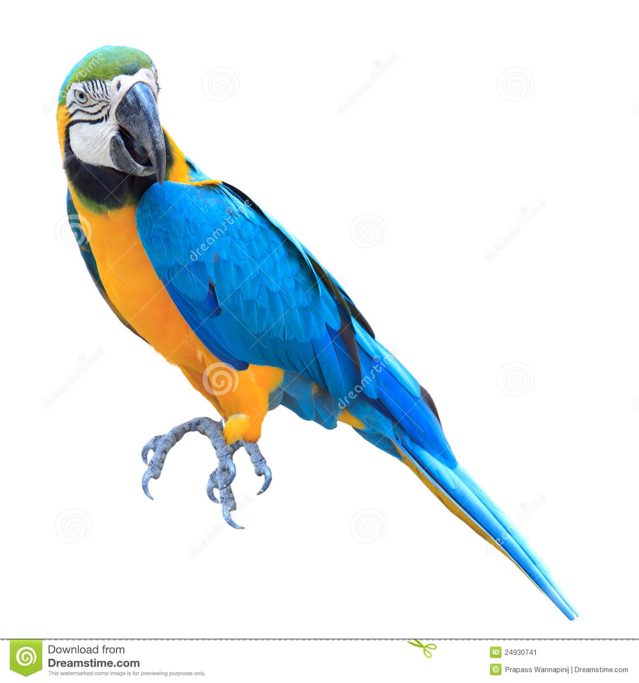 Colorful Blue Parrot Macaw Isolated Stock Image Image