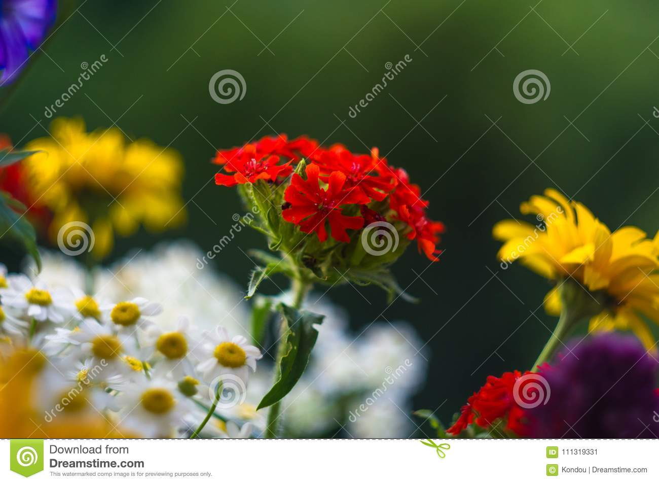A Bouquet Of Bright Spring Flowers Of Various Types Stock Image