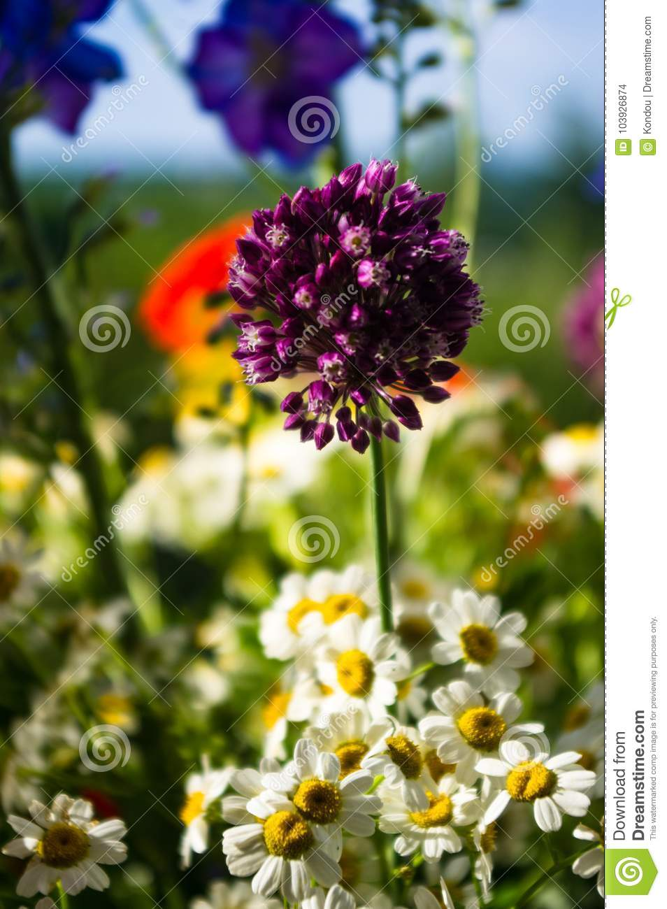 A bouquet of bright spring flowers of various types stock photo download a bouquet of bright spring flowers of various types stock photo image of birthday izmirmasajfo