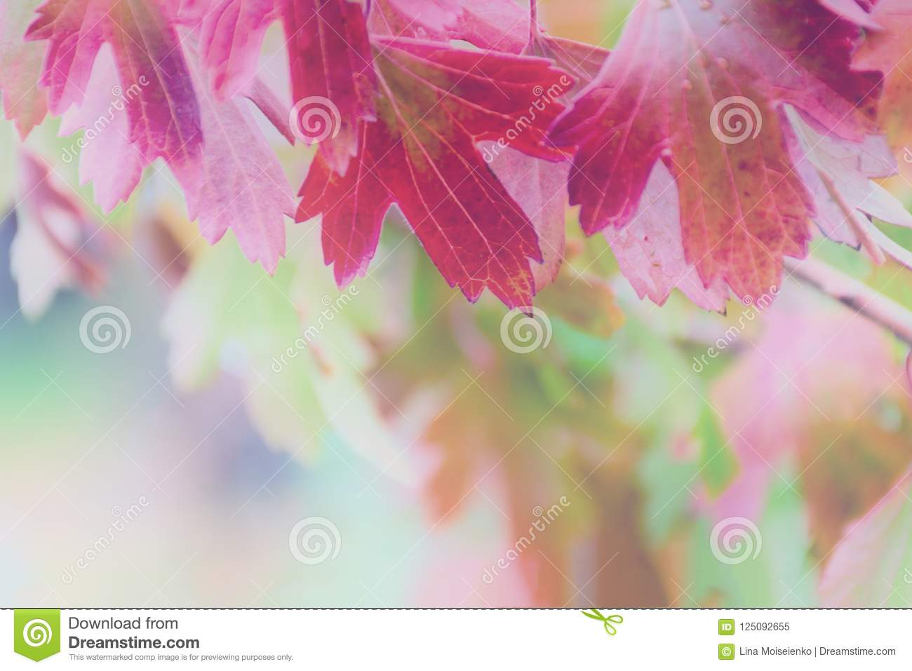 Colorful and bright background of blurred autumn leaf