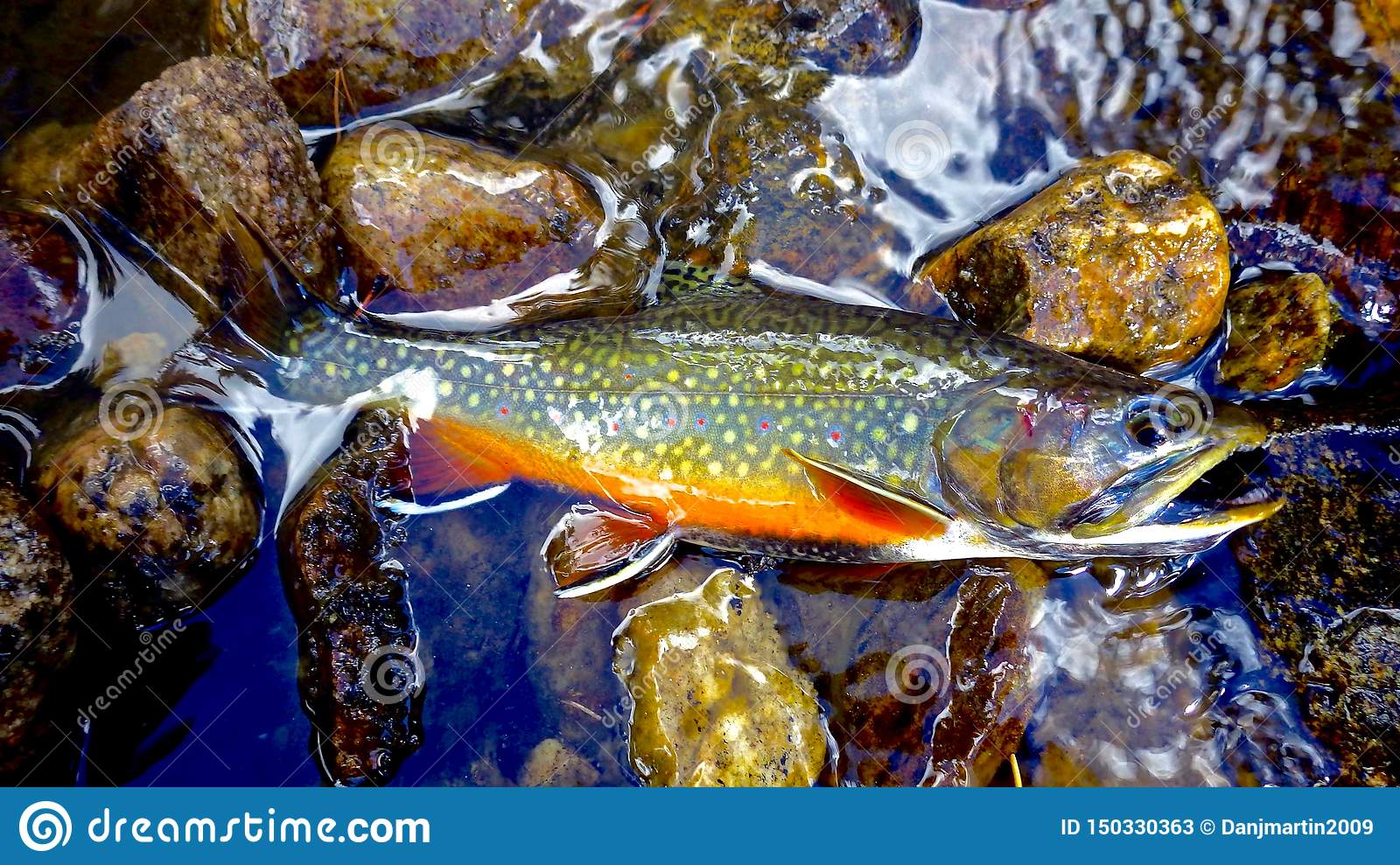 1 715 Brook Trout Photos Free Royalty Free Stock Photos From Dreamstime