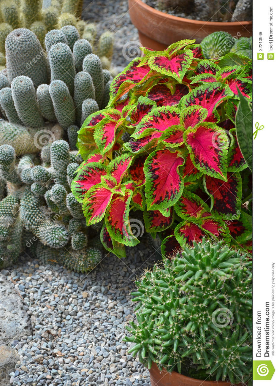 Potted Plants In Garden Plan Toys Play House Potted Plants In - cactus garden plan