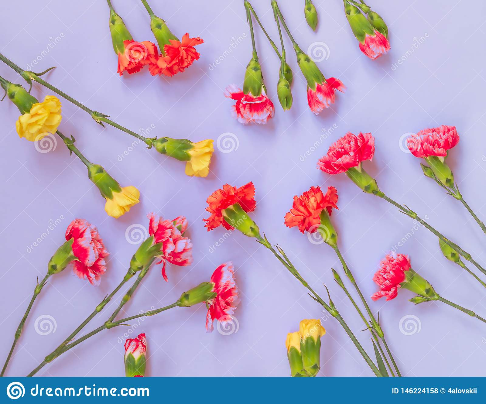 Colorful carnation flowers on light blue background. Flat lay, Top view