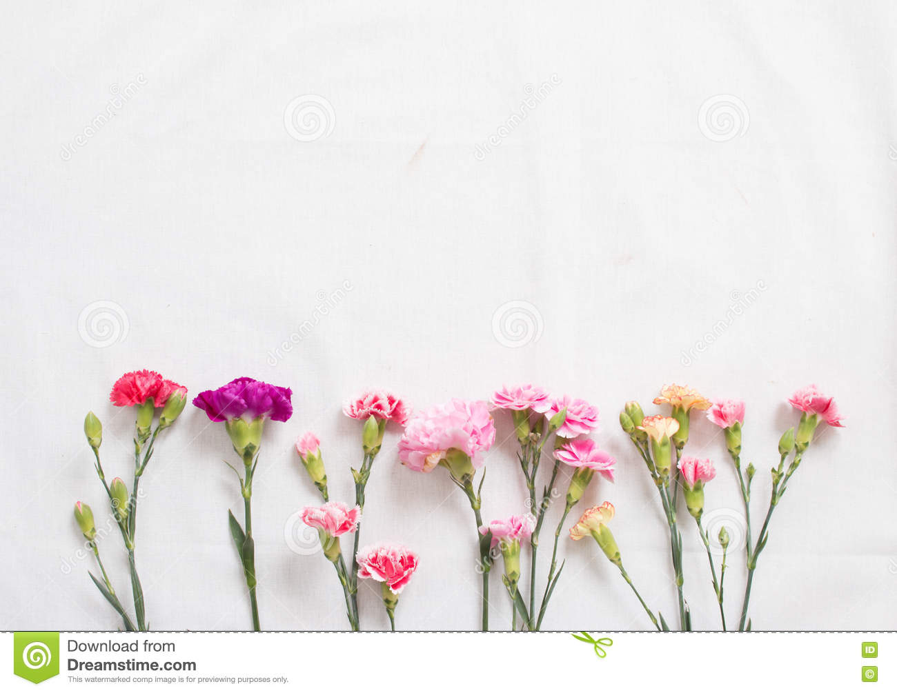 how to make carnations bloom faster