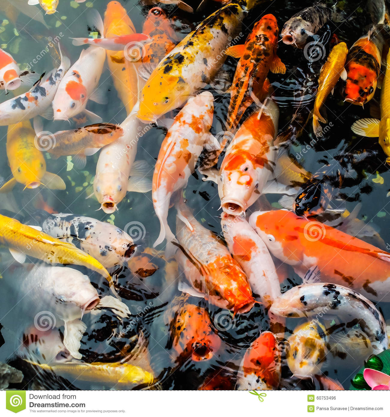 Colorful carp fish stock photo image 60753496 for Colorful pond fish