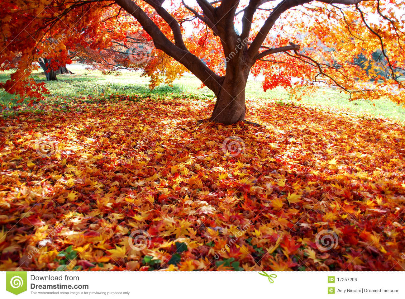 Colorful carpet of fallen leaves
