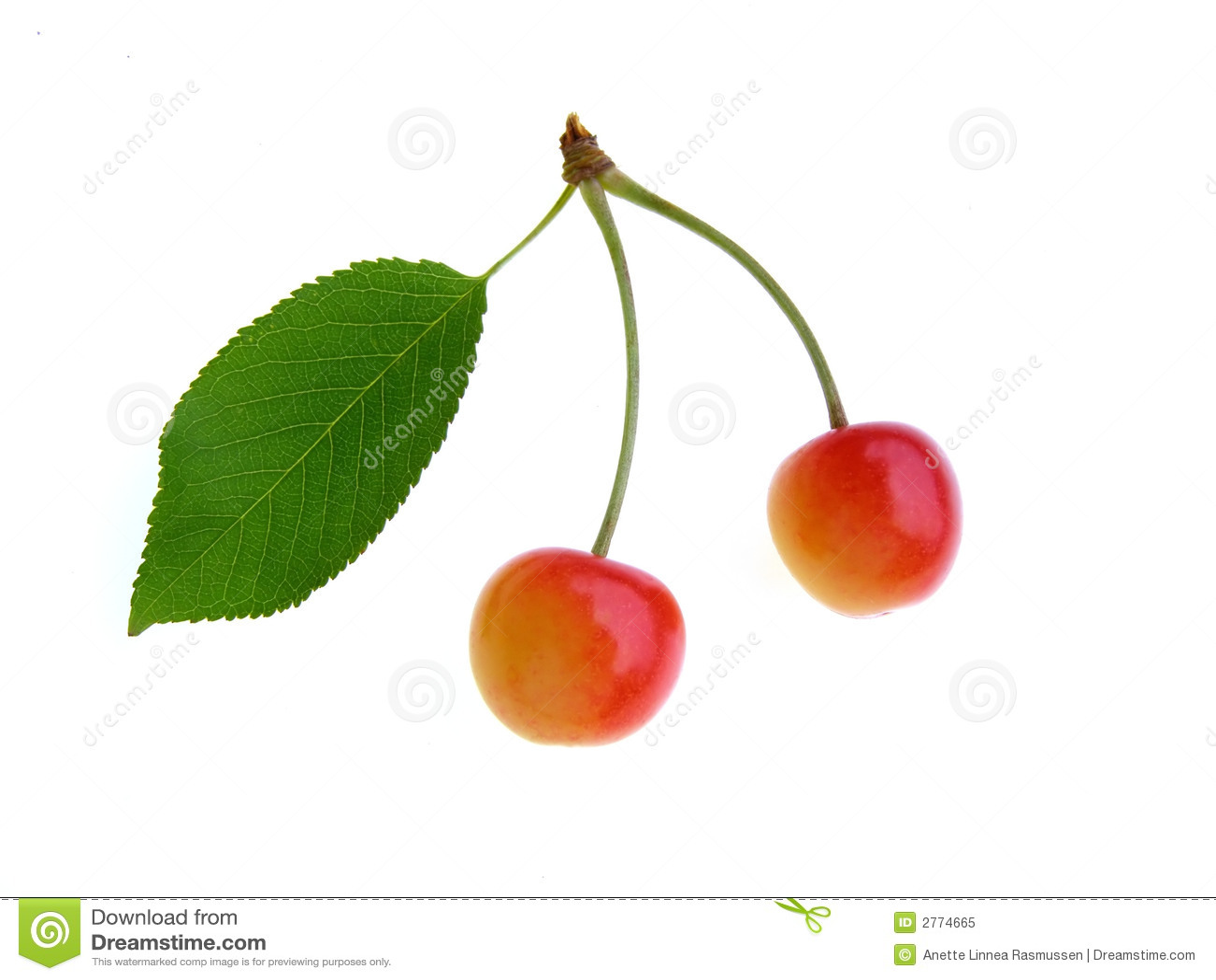 Colorful cherries