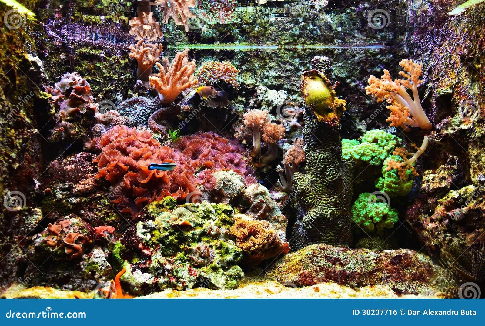 Colorful exotic aquarium