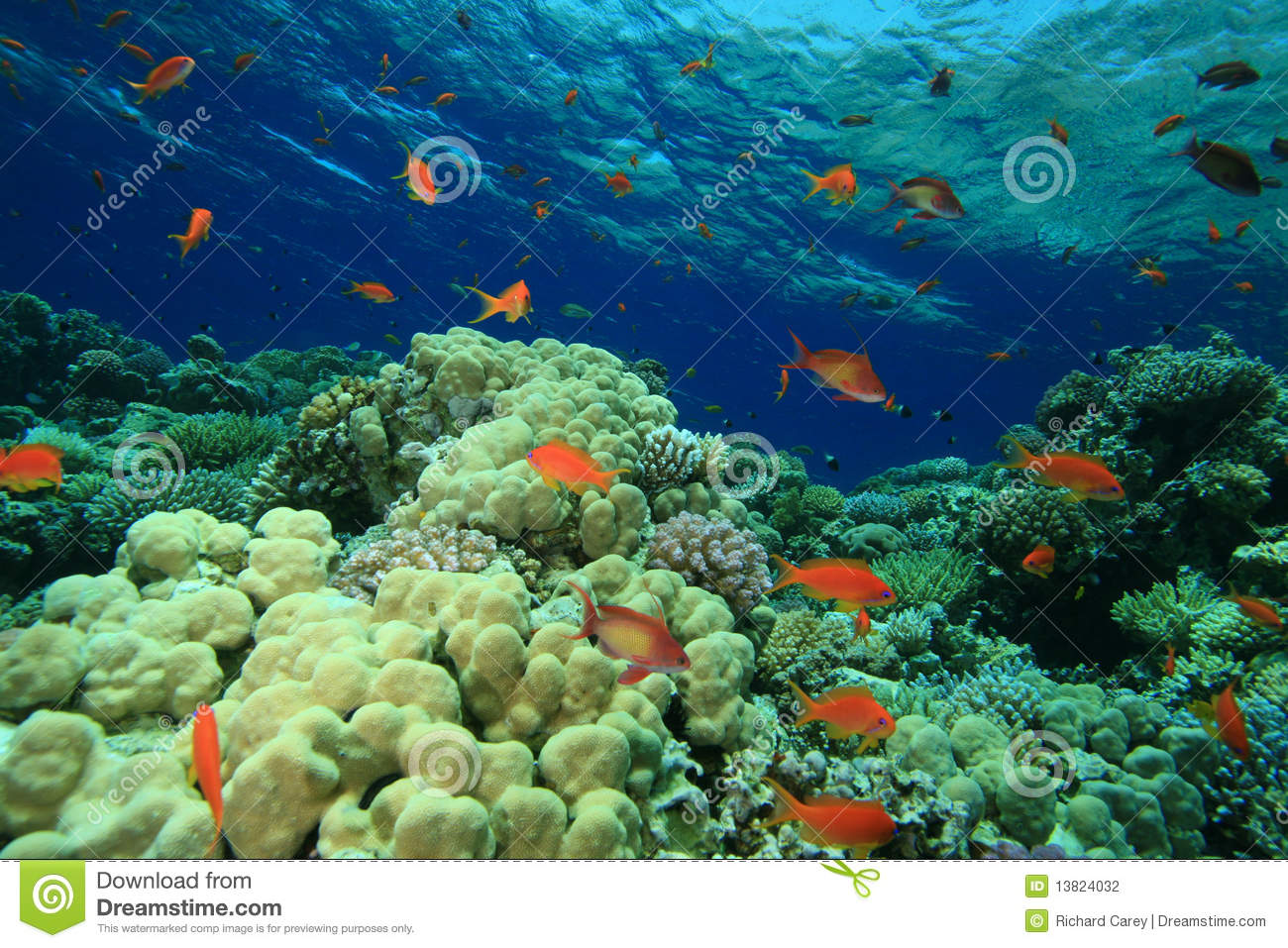 beautiful colorful coral reefs - photo #23