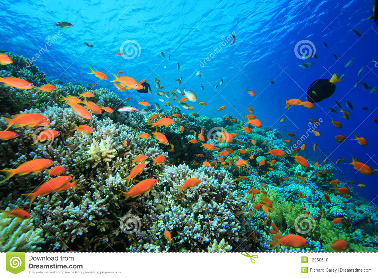 beautiful colorful coral reefs - photo #17