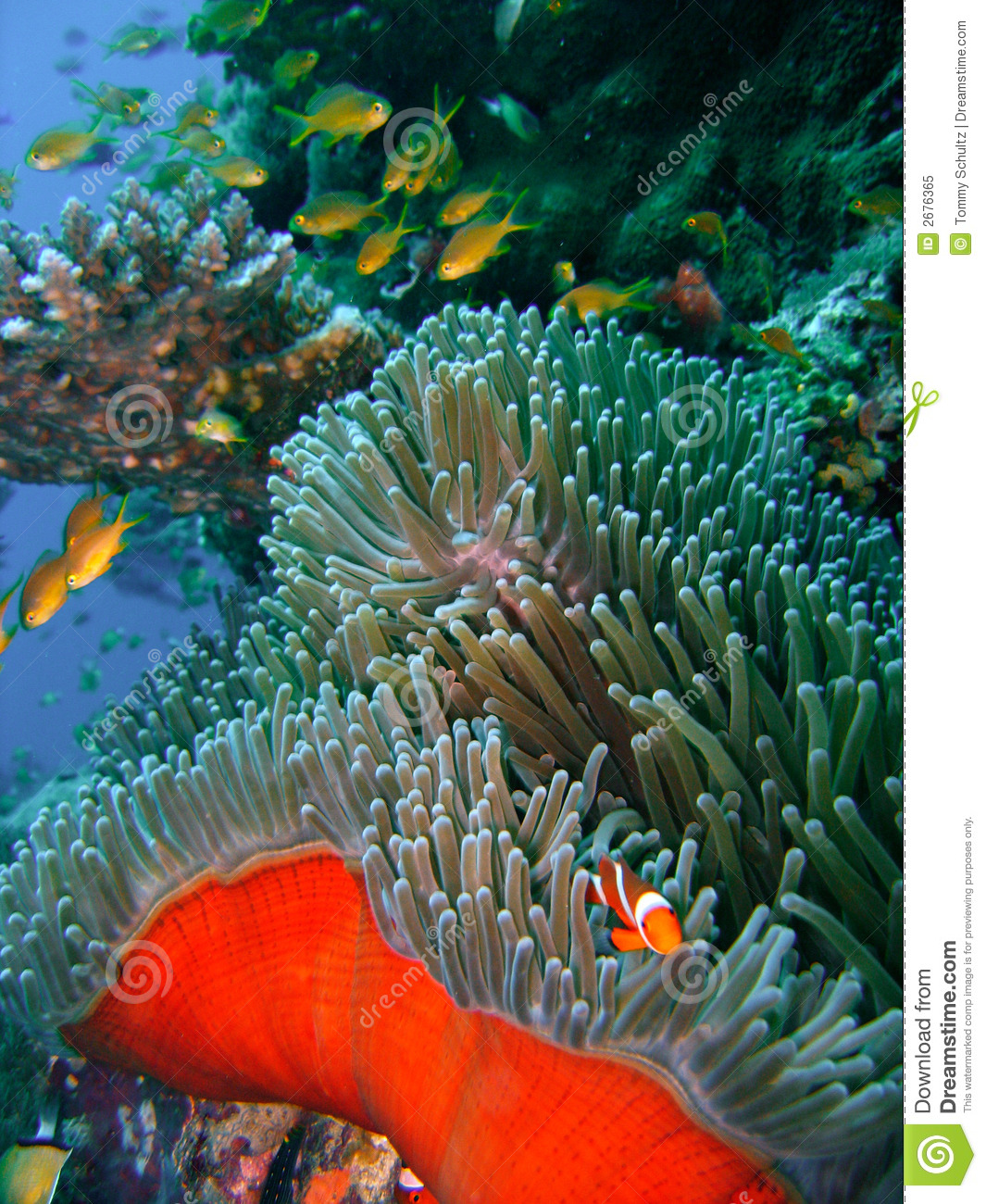 Colorful coral reef fish stock image. Image of caribbean ...