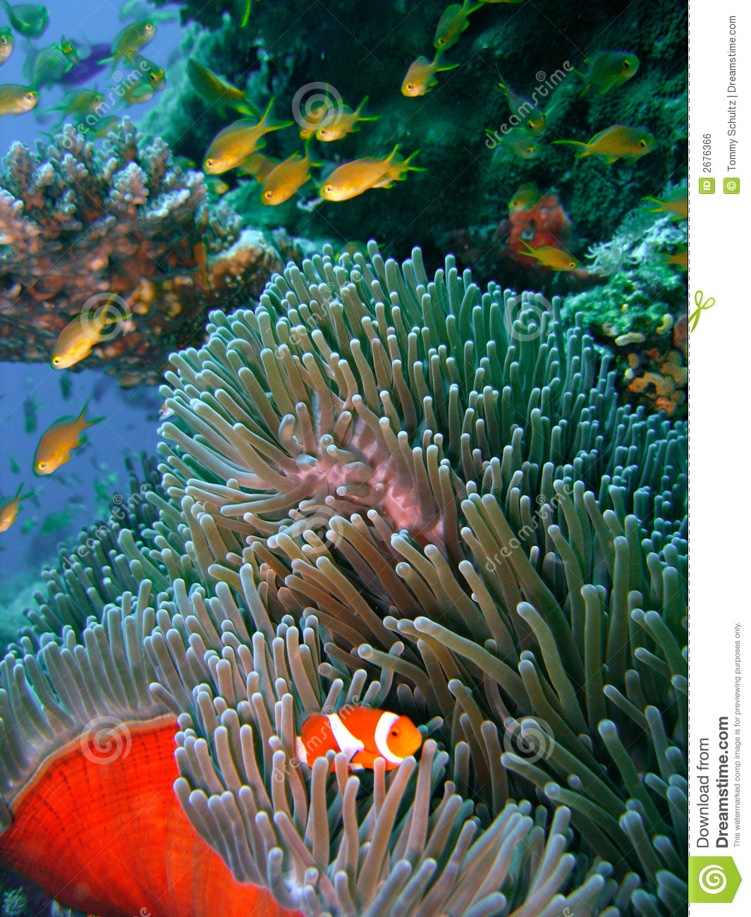 Colorful coral reef fish stock photo. Image of psychedelic ...