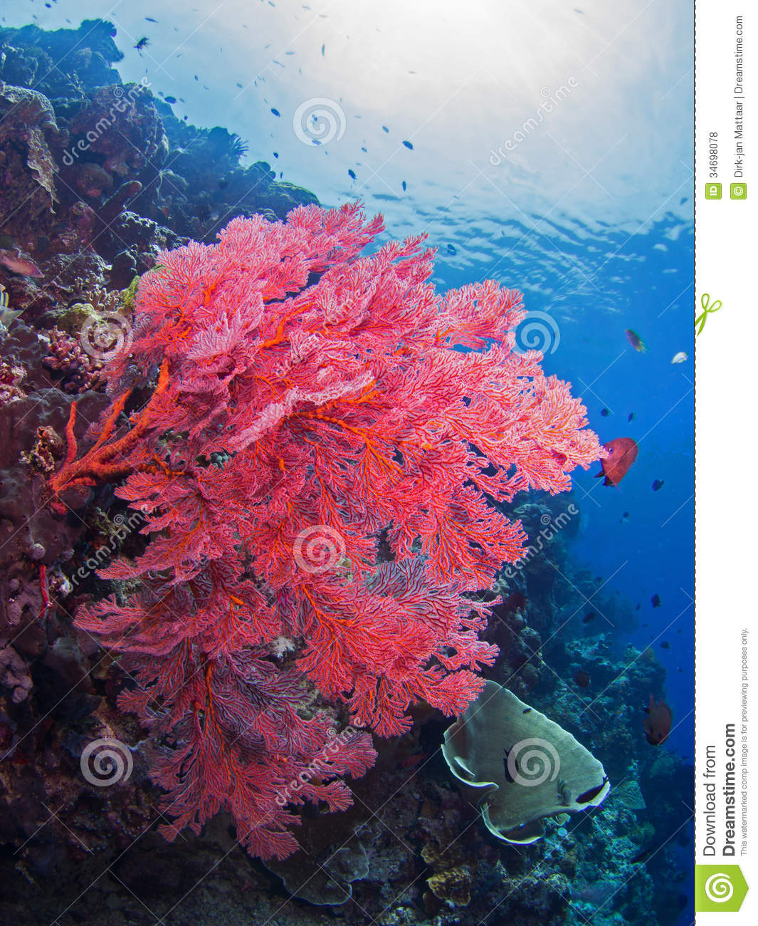 beautiful colorful coral reefs - photo #22