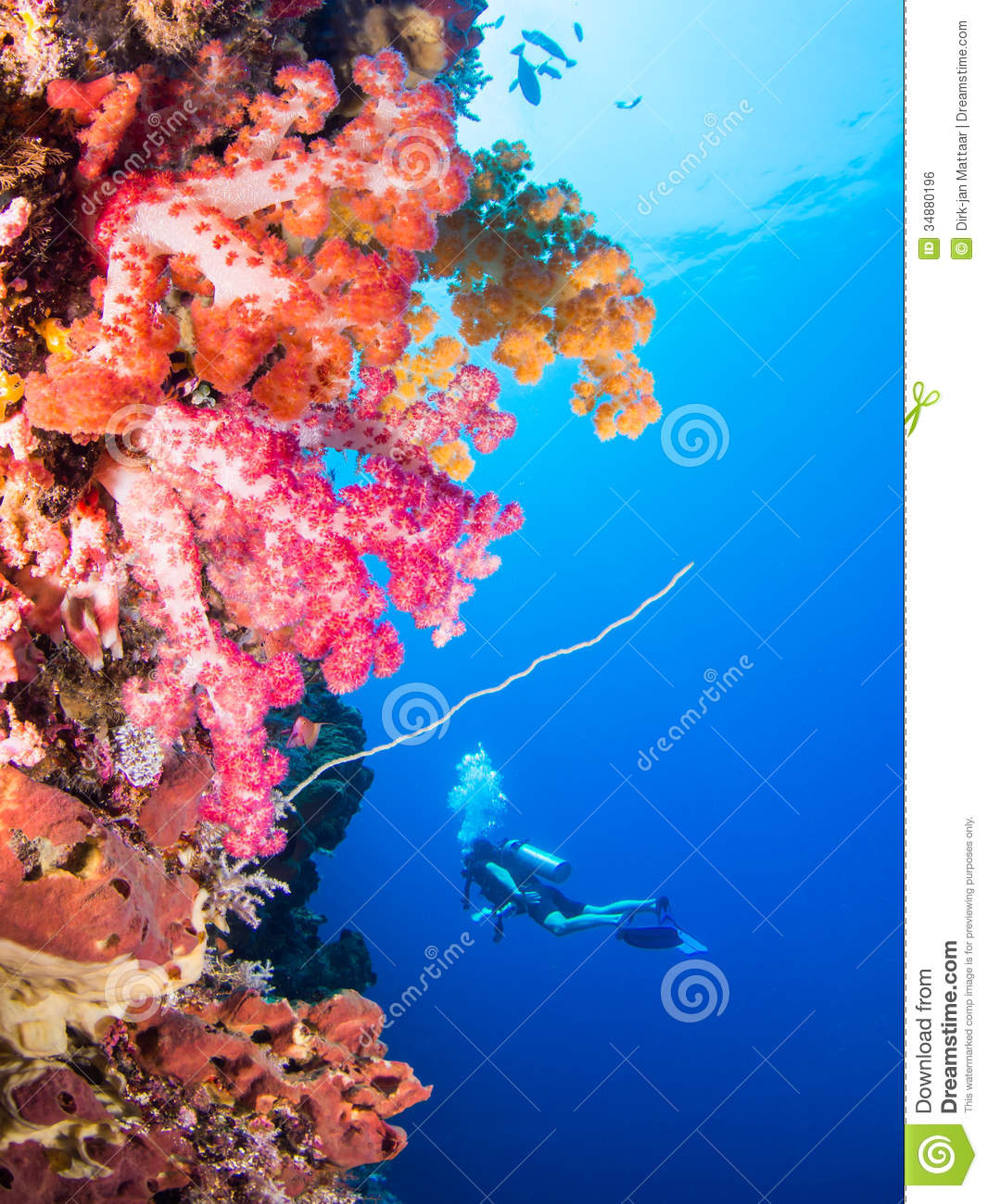 Coral Reef Background: Colorful Coral Reef Stock Photo. Image Of Scuba, Sports