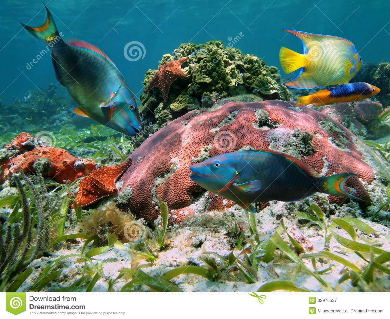 Colorful coral reef with tropical fish royalty free stock for Reef tropical fish
