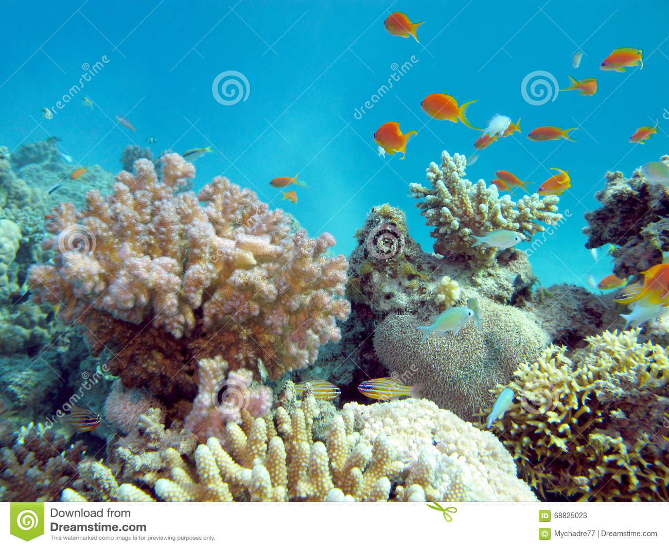 Colorful Coral Reef In Tropical Sea, Underwater Stock ...