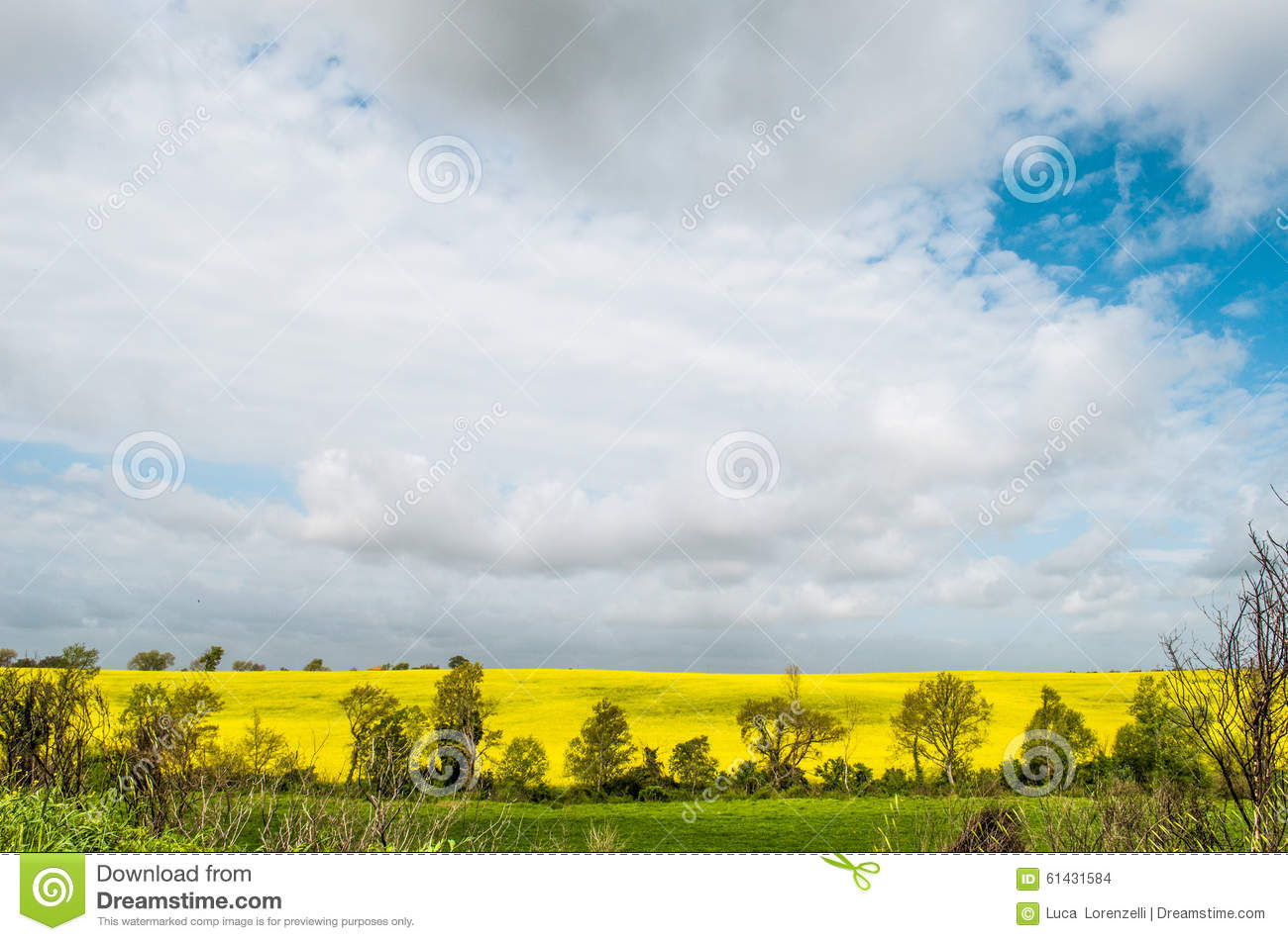Colorful countryside cloud sky landscape, yellow field