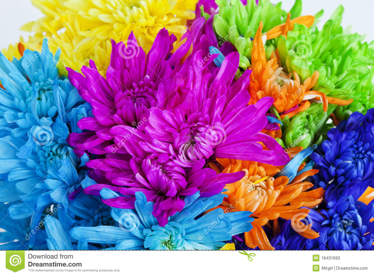 colorful daisy flower background stock photos  image, Beautiful flower