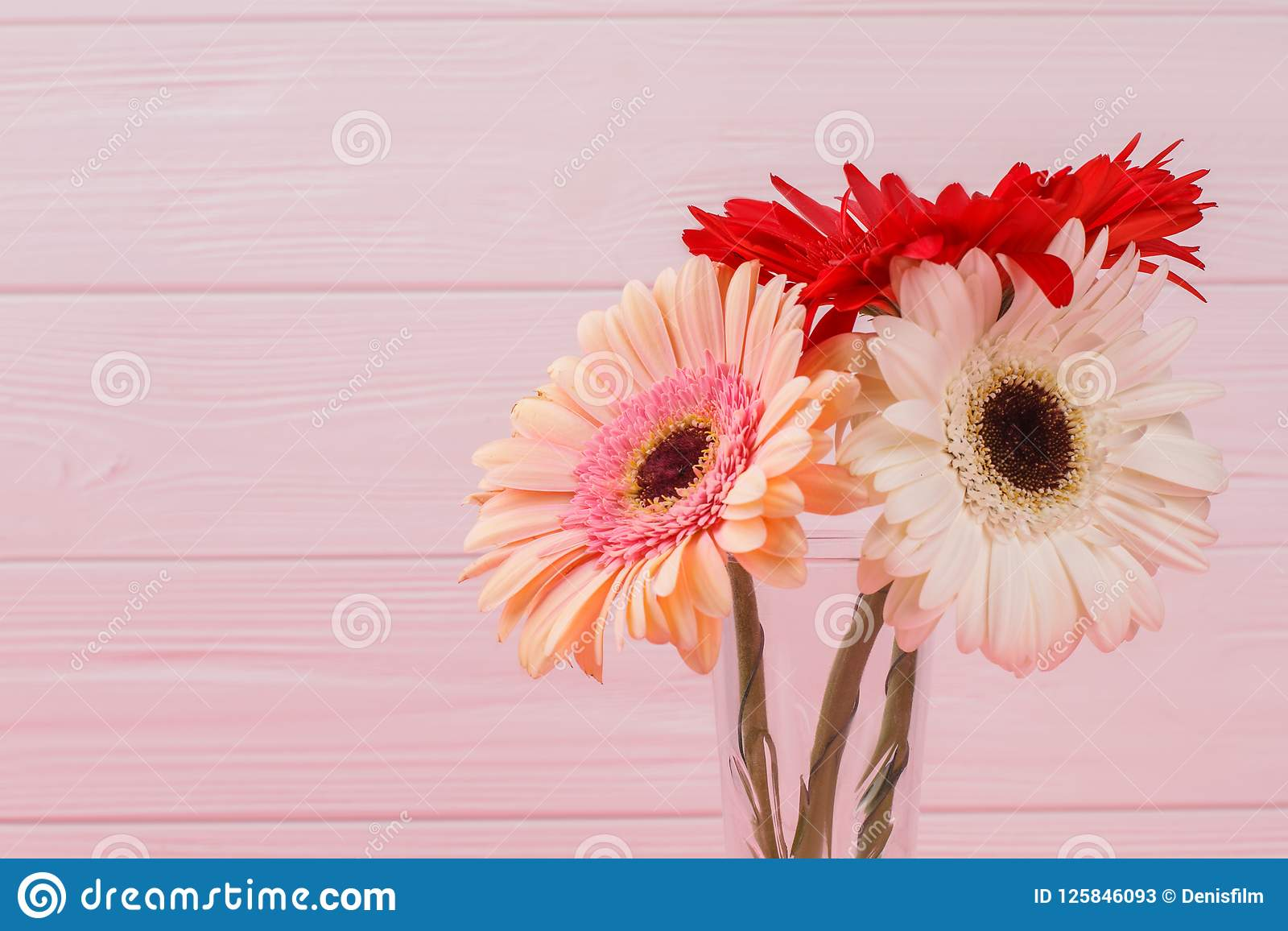 Colorful Daisy Flower Heads Stock Image Image Of Decoration Gift