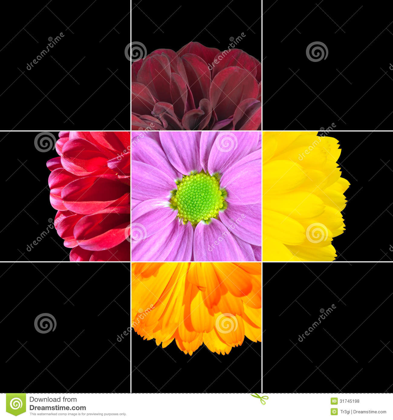 Colorful daisy flower mosaic design stock photo image of closeup colorful daisy flower mosaic design which is consisting of 9 squares on 3x3 grid with parts of daisy or dahlia flower izmirmasajfo