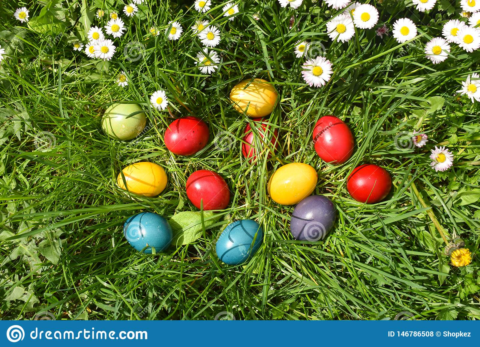 Colorful Easter eggs in the green grass with white spring flowers