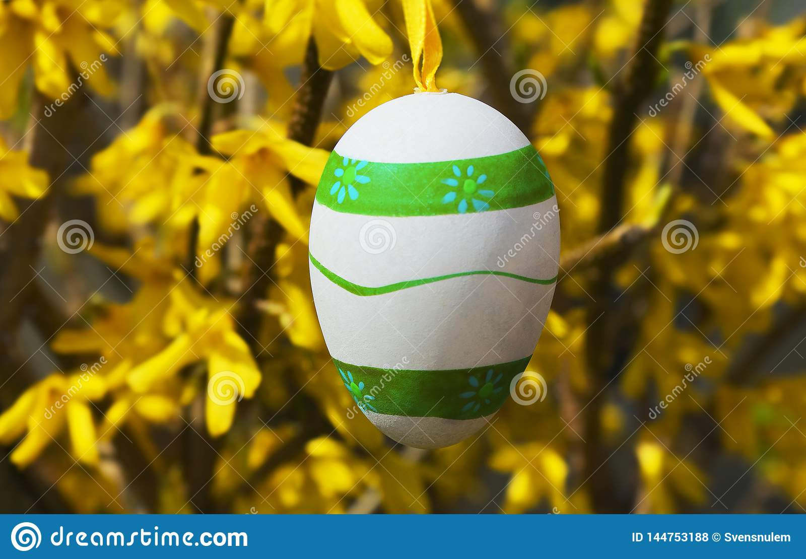 Colorful easter eggs hanging on the forsythia shrub in the garden