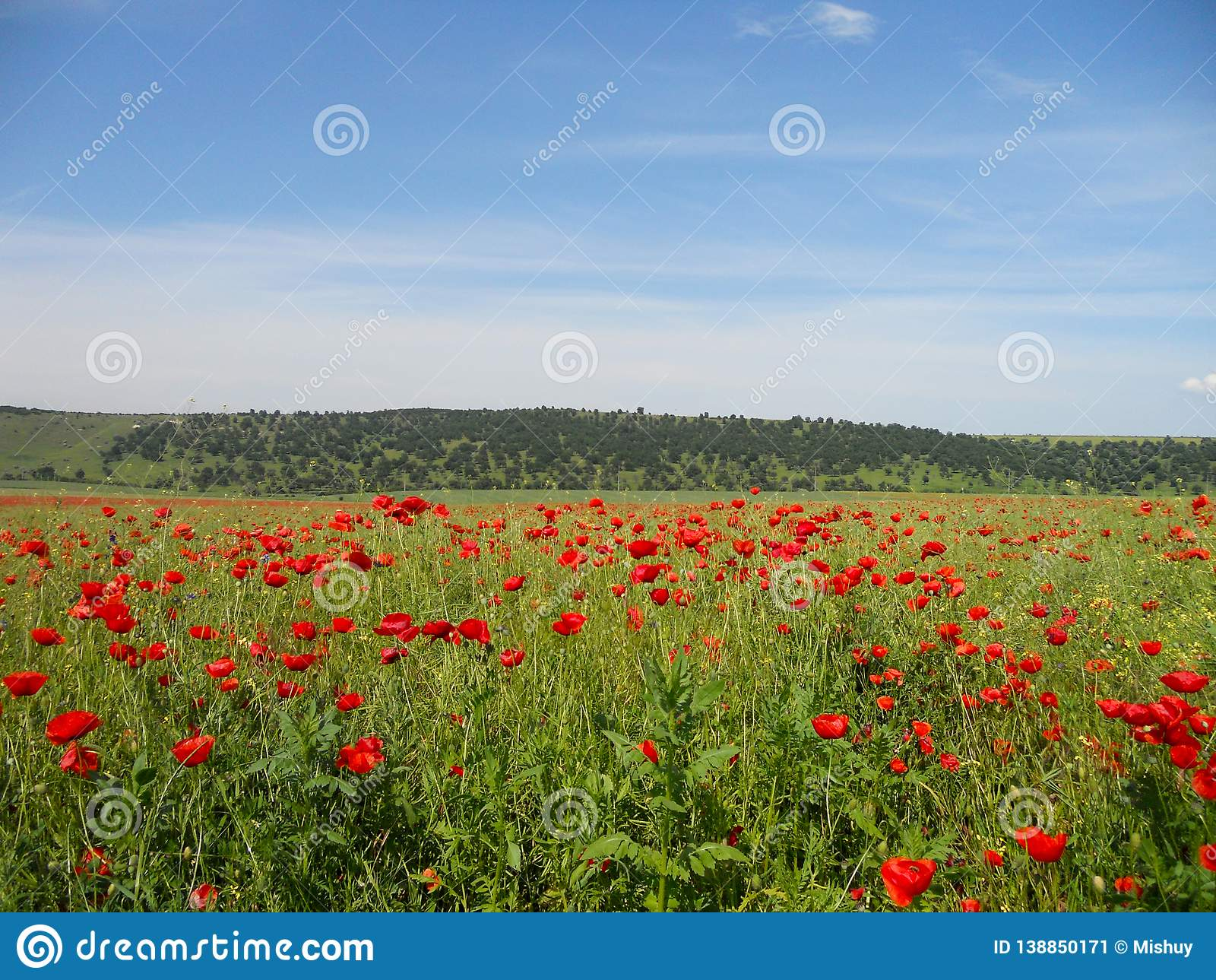 Poppy field, Summer landscape