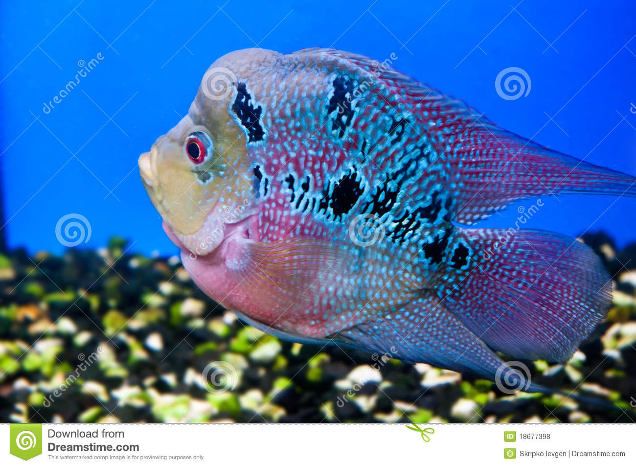 Colorful Fish Royalty Free Stock Photos Image 18677398