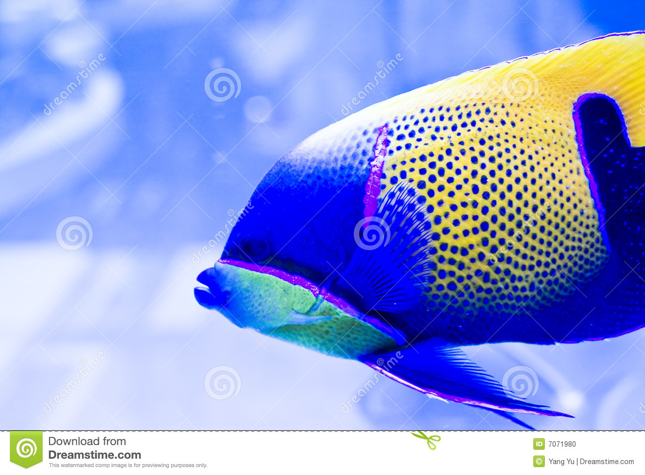 Colorful fish stock photo image 7071980 for Closest fish store