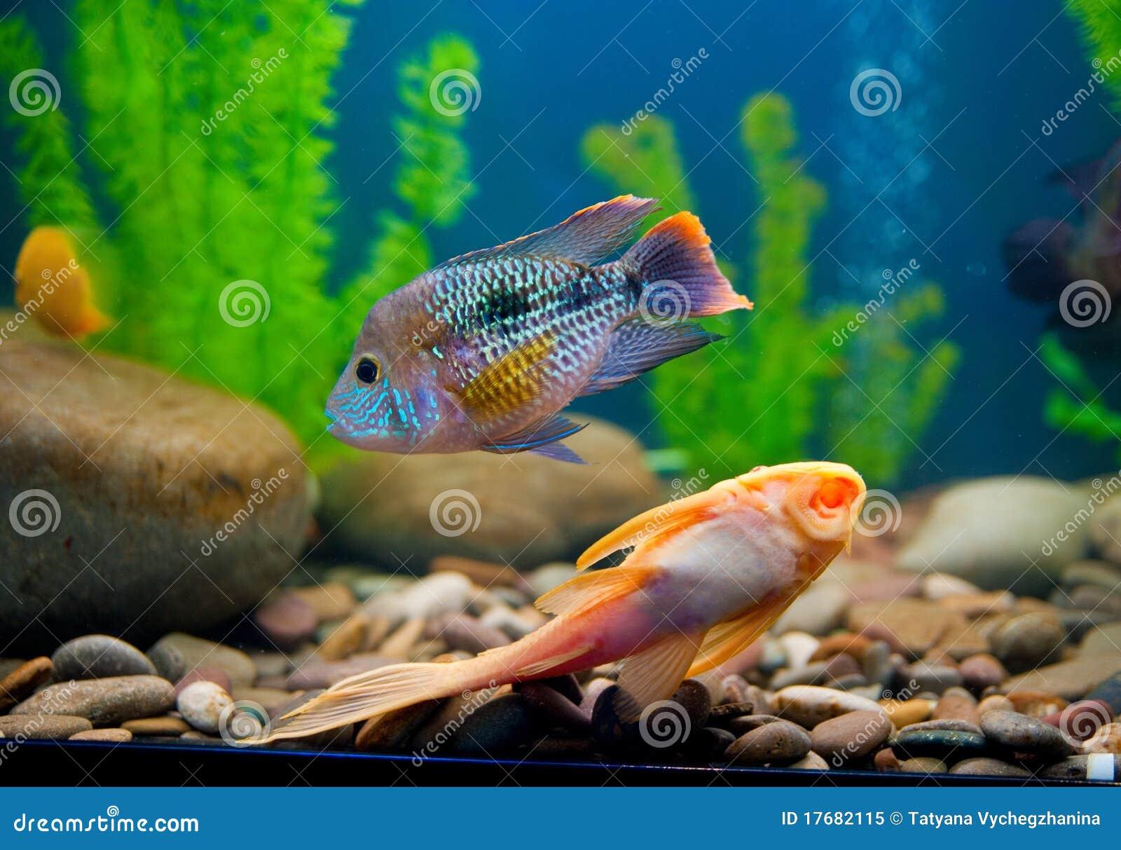 Colorful Fish Aquarium Royalty Free Stock Photo Image