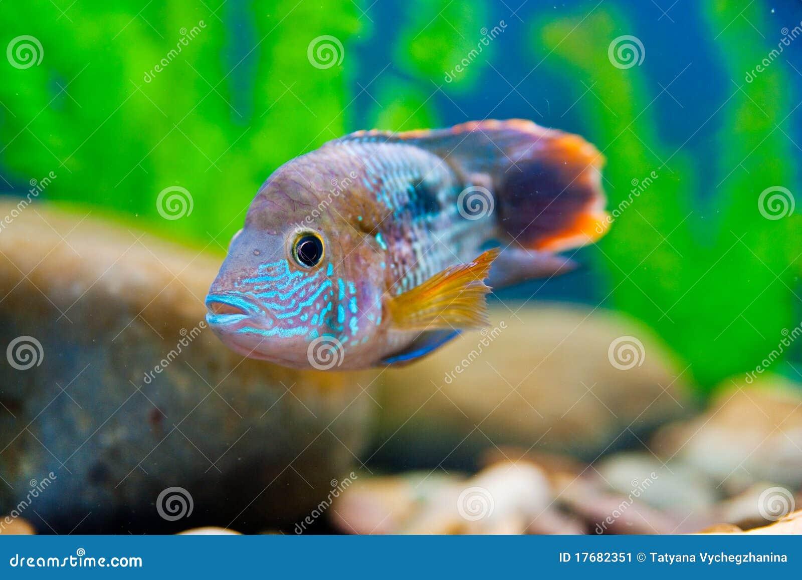 Colorful Fish Aquarium Stock Image Image Of Diving