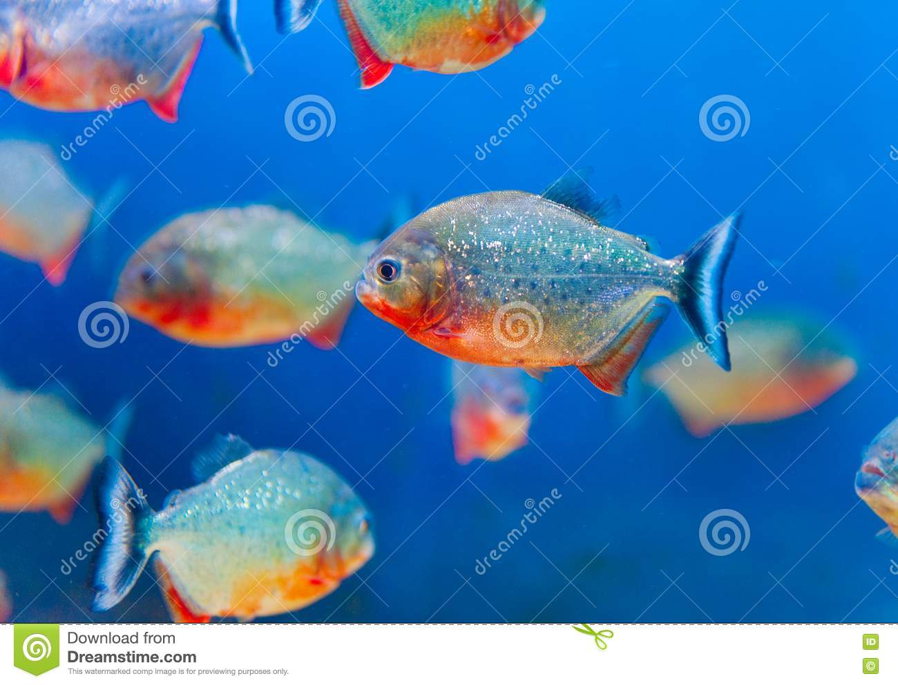 Colorful fish aquarium stock photo image of hobbies for Colorful freshwater fish