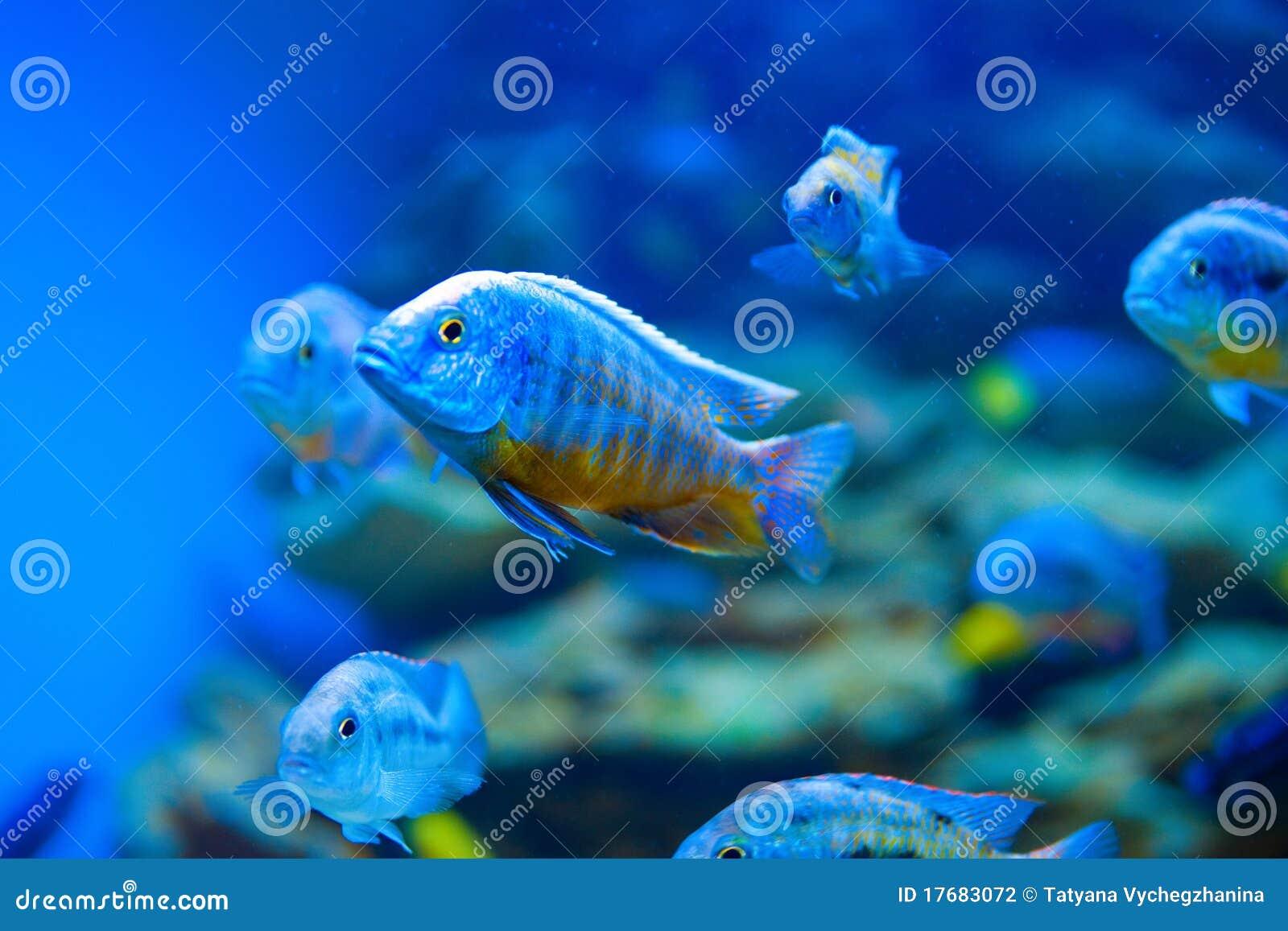 Colorful Fish Aquarium Stock Photography Image 17683072