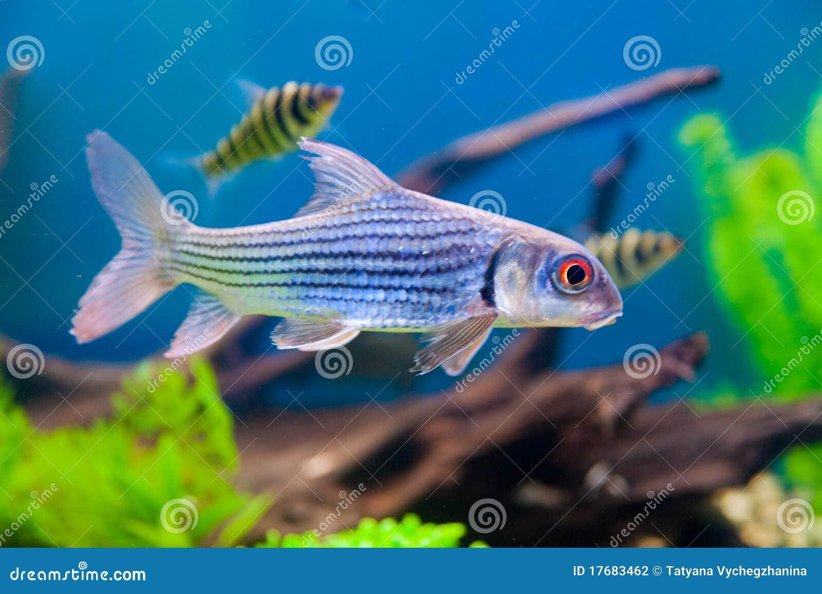 Colorful Fish Aquarium Stock Photography Image 17683462