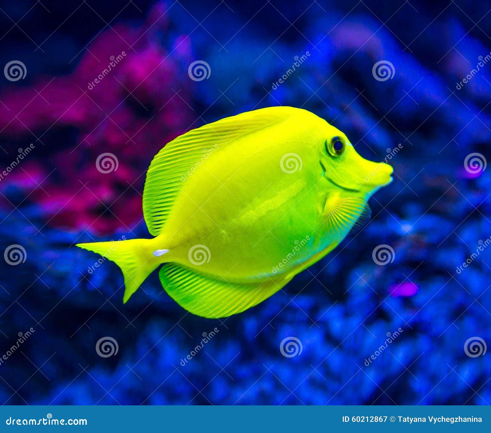 Colorful fish in aquarium stock image. Image of nature - 60212867