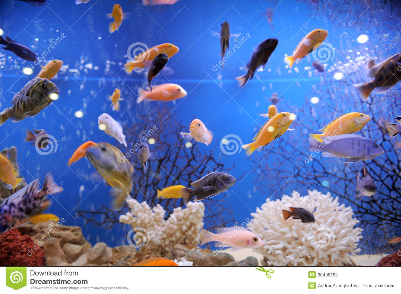 Colorful Fish Stock Photos Image 30498183