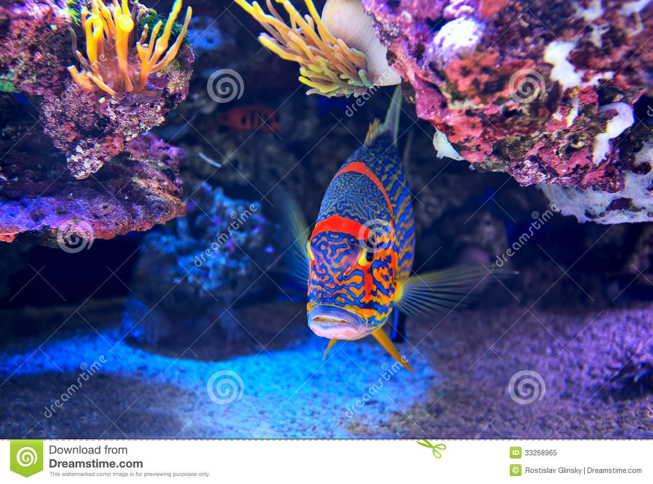 Colorful fish on the bottom stock image image 33268965 for Colorful tropical fish