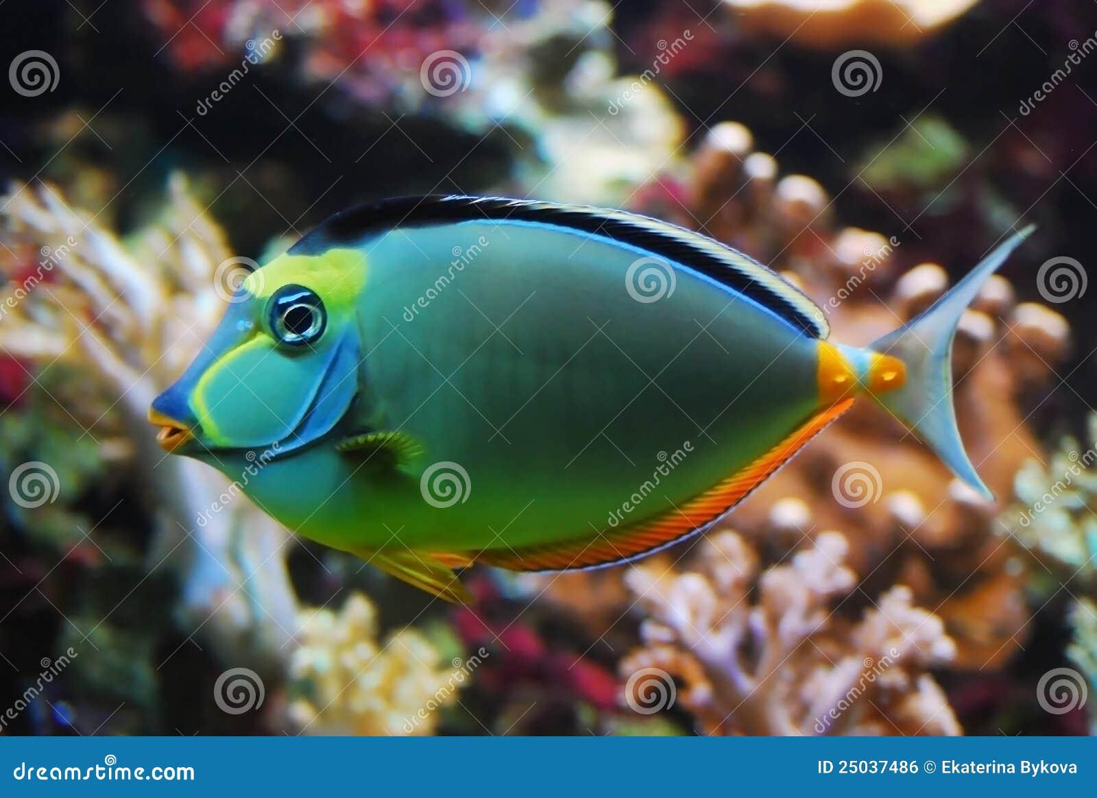 Colorful fish closeup stock photo. Image of plant, closeup - 25037486
