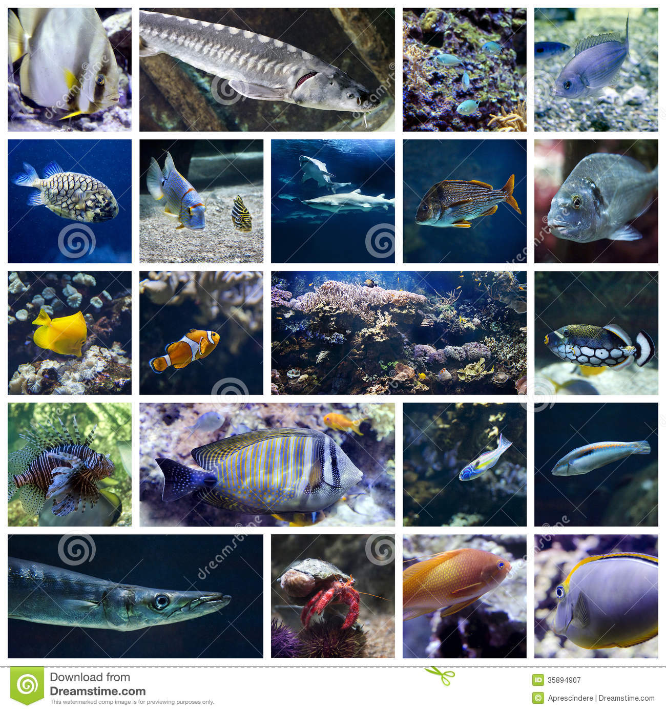 Colorful Fish Collage Royalty Free Stock Photography ... Pacific Ocean Underwater Animals