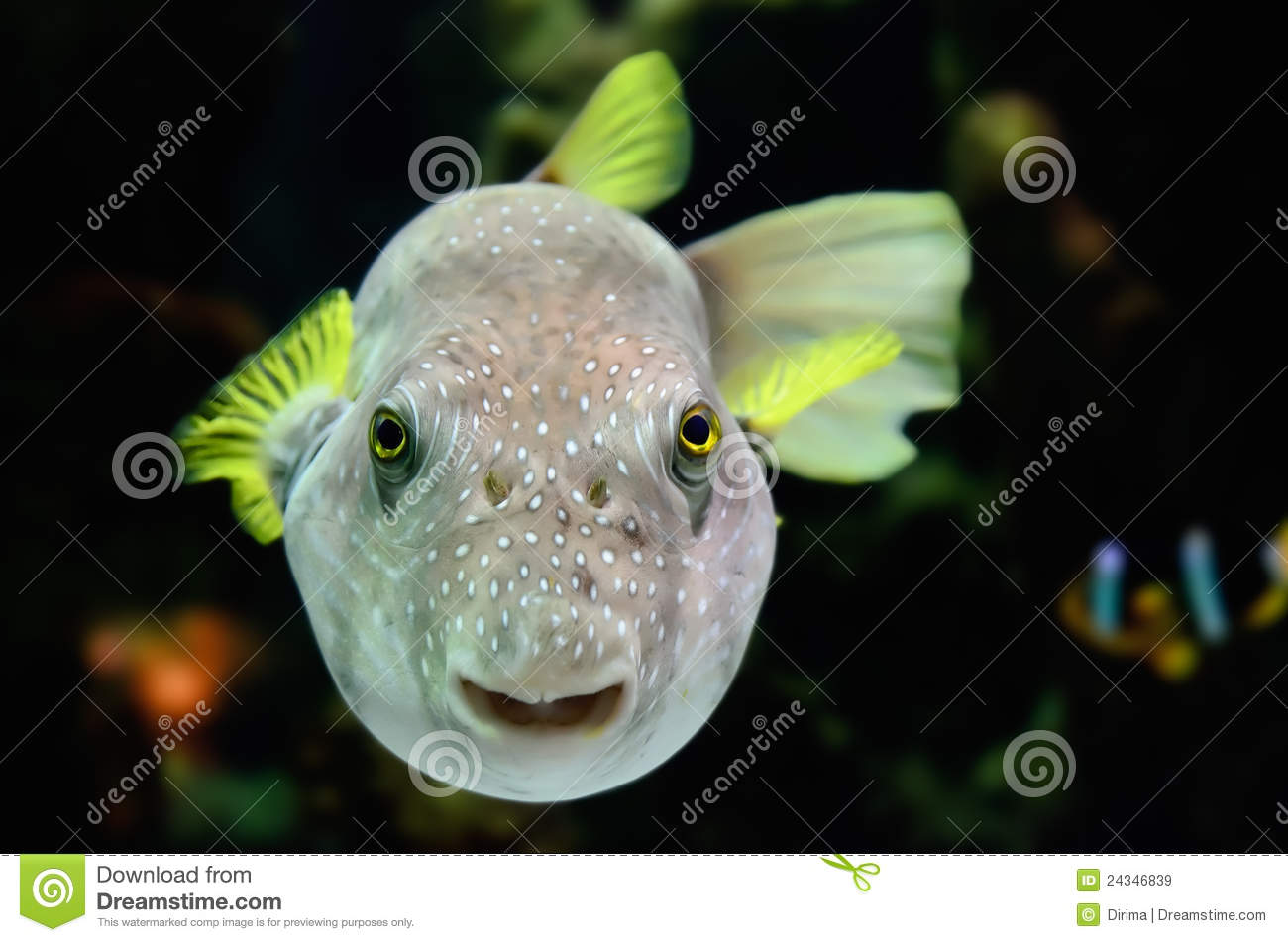 Colorful fish looking at camera stock image image 24346839 for Photos of fish