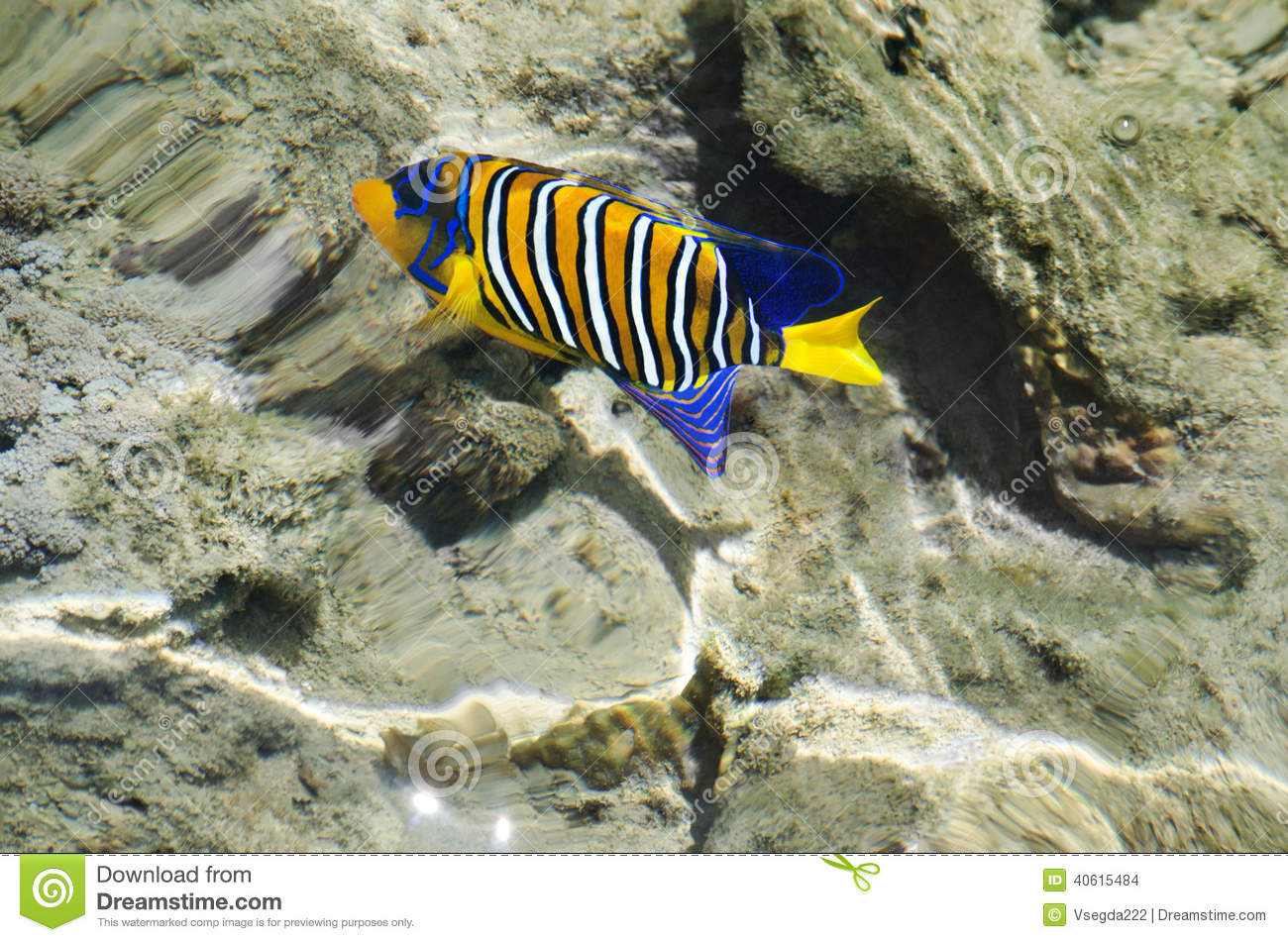 Colorful fish of the Red Sea